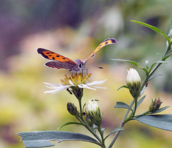 Butterfly, macrophotography