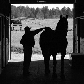 How To Make Sure A Potential Client Is A  Good Fit For Your Boarding Stable