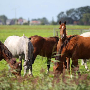When A Boarder Owns More Than Two Horses...The Financial Risks Involved