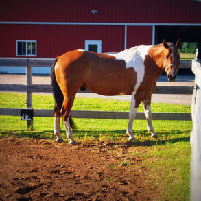 Am I Crazy For Starting A Horse Boarding Business?