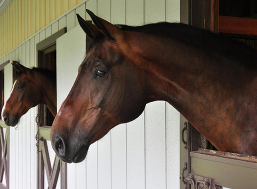 Is Your Boarding Stable Worth What You Are Charging?