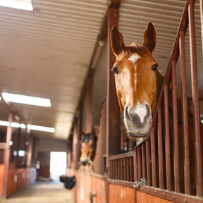 Boarding Stables - The Core Of The Equine Industry