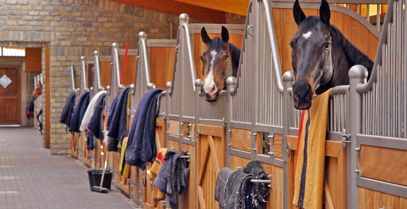 Who Is Actually In Charge At Your Boarding Stable?