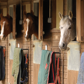 Surviving The First Year Of Boarding Other People's Horses