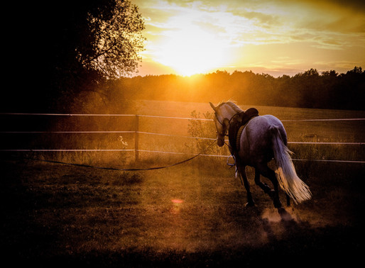 Should Boarders Be Required To Exercise Their Horse?