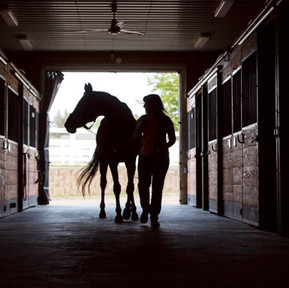 The Horse Barn Management Show! Equine Business Insurance Explained!