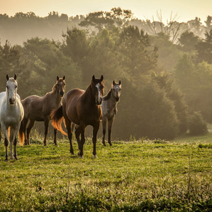 The Horse Barn Management Show! Are Your Herd Management Decisions Stressing Out The Horses?