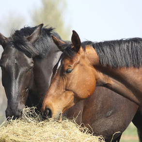 5 Signs That You Are Still Running Your Horse Business Like A Hobby Farm