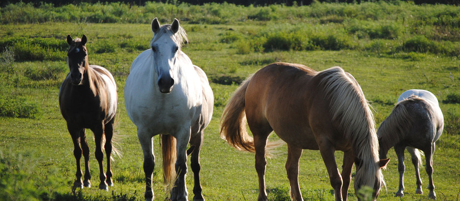 Purchasing An Existing Horse Boarding Business?