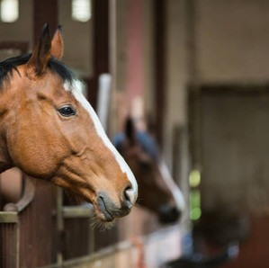 The Horse Barn Management Show! Are Your Employees Helping or Hurting Your Horse Business?