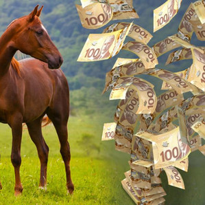 The Horse Barn Management Show! Can You Make Money Boarding Horses??