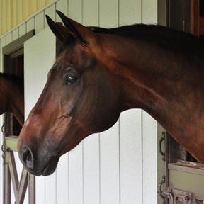 Can You Make An Honest Living Boarding Horses?