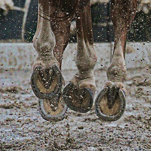 The Horse Barn Management Show! Mud Is On Everyone's Mind!!