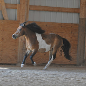 The Horse Barn Management Show! Should You Offer A Reduced Rate Depending On The Size Of The Horse?
