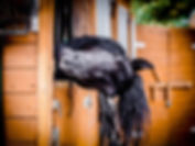 black horse.jpg
