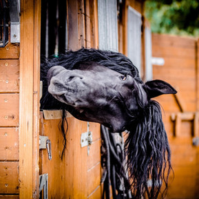 The Horse Barn Management Show! Real questions and honest answers about barn management