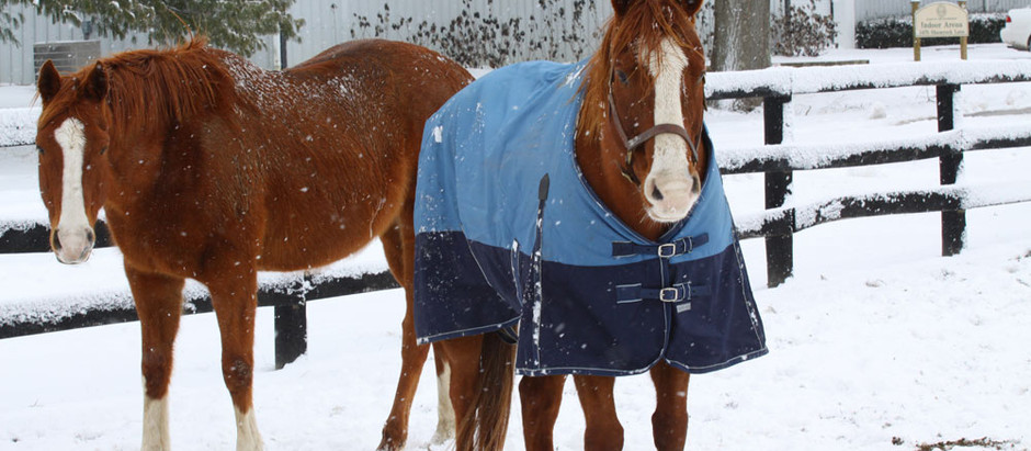 The Truth About Blanketing And Your Boarding Business
