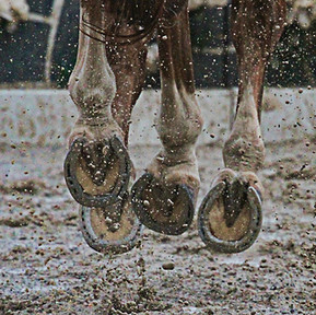 Horses, Mud And Your Boarders...A Very Challenging Time Of Year