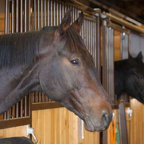 The Many Reasons A Boarder Will Leave Your Barn