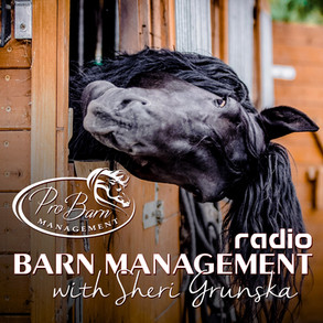 The Many Stages Women Experience After Starting Their Horse Business (Podcast)