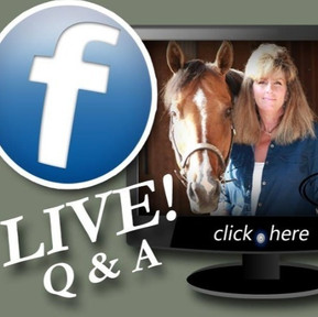 The Horse Barn Management Show! Who Is Actually In Charge At Your Boarding Stable!?