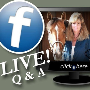 Horse Barn Management Webinar #5  Real Barn Management Talk About Your Horse Business