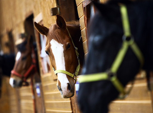 How To Make Sure A Boarding Stable Is The Right Fit For Your Horse