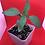 Thumbnail: Starter Plants