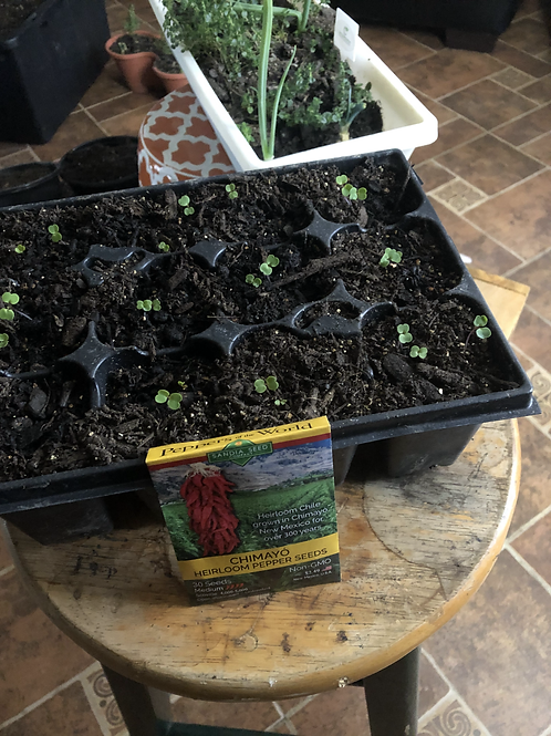 Filthy Rich Nutrients - Seed Starting Mix