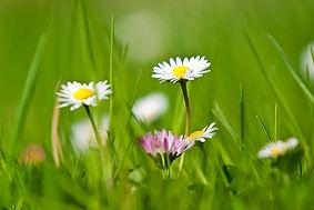 Frühlingswiese_1.jpg