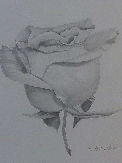Graphite of a Rose