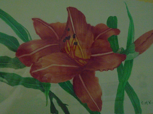 Day Lilly in Red Orange