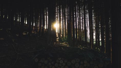Hüfingen Wald