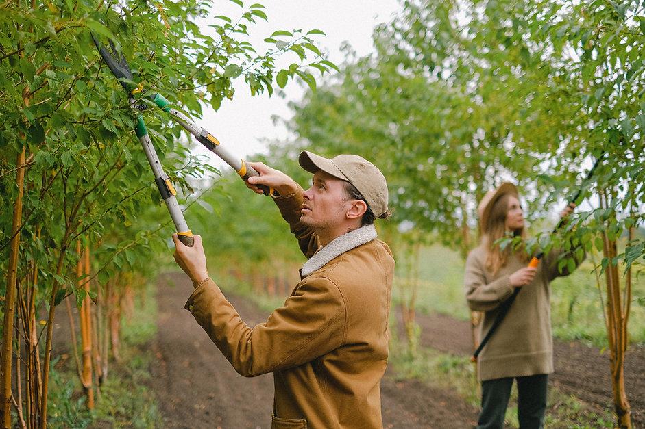 Aktion Baum Jobs.jpg