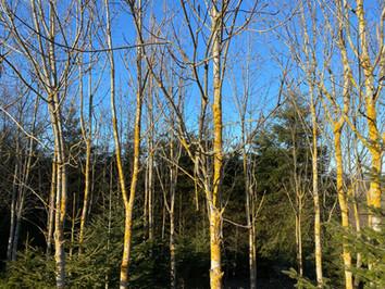 Hüfingen Wald 2