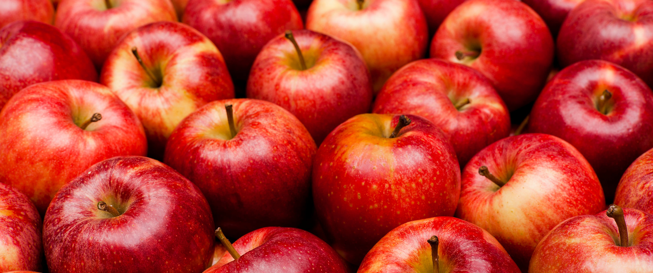 East Coast Apples | Hudson River Fruit Distributors | United
