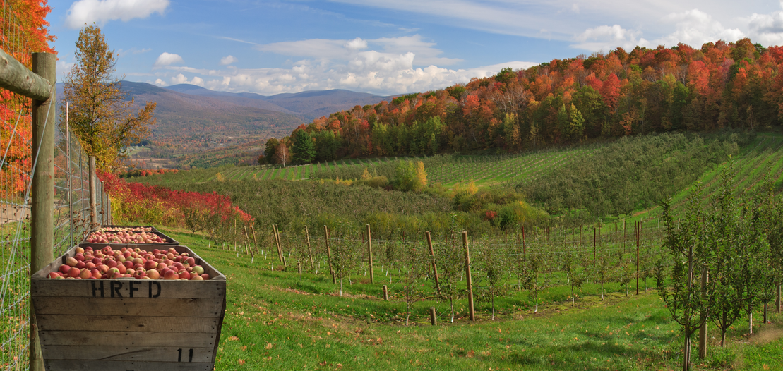 Southern Vermont Orchards