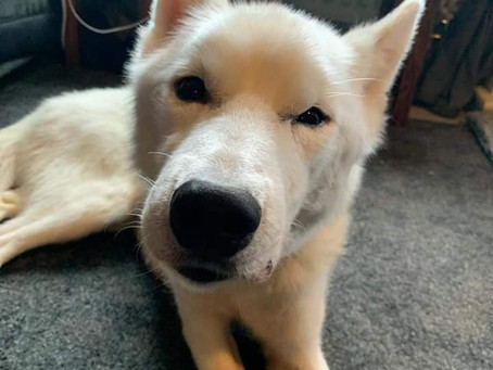 Urgent Appeal - Help Sled Dogs In Need!