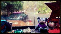 A cozy rainy day in Primrose