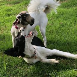 Mid day puppy wrestle
