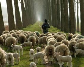 Let Us Hear Our Shepherd's Voice