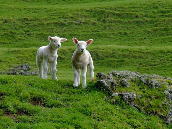Singing Your New Song & Following The Lamb Wherever He Goes