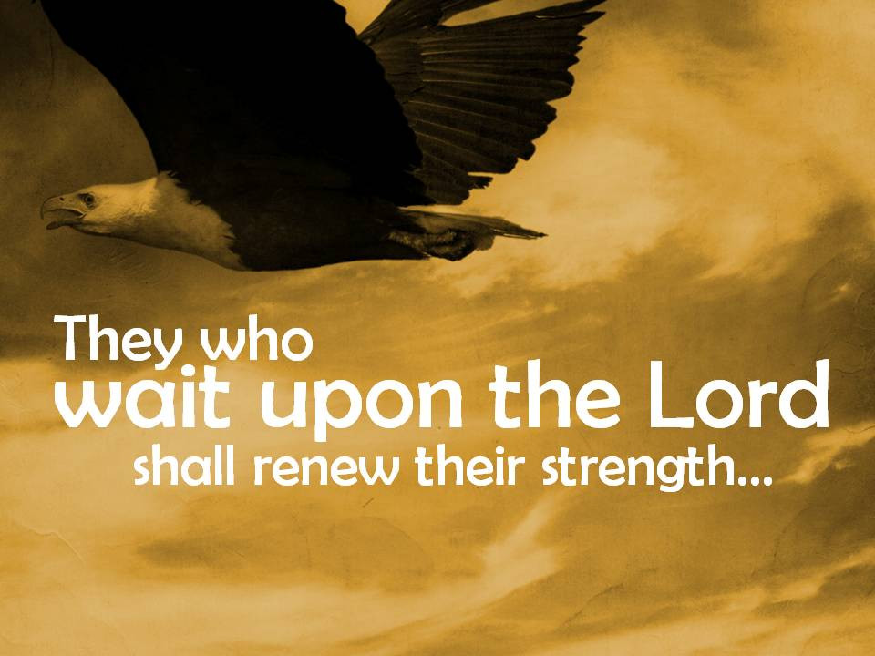 Those Who Wait For The Lord