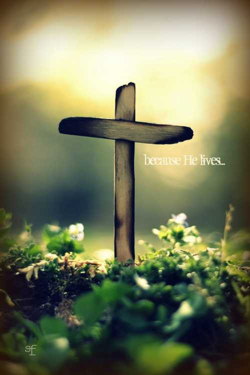 The Son Of God, Who Loved