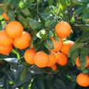 Tangerine_edited.jpg