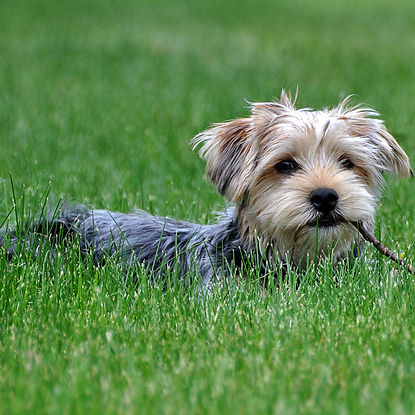 Dog in the Grass.jpg
