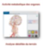 Biospect Activité Métabolique des organes, Analyse détaillée du terrain