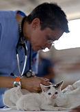 La peur du vétérinaire