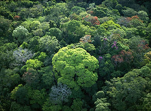 rainforest_canopy.jpg