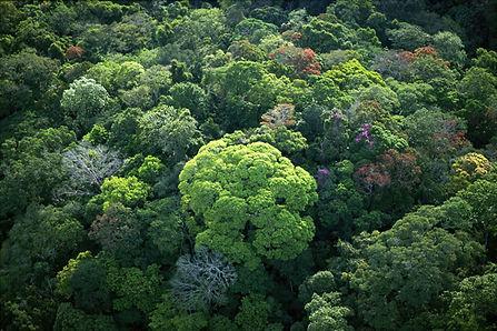 rainforest_canopy.jpg